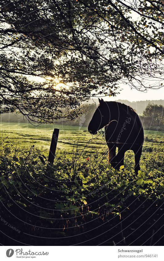 Fury Reiten Reitsport Umwelt Natur Landschaft Pflanze Tier Schönes Wetter Baum Gras Wiese Feld Haustier Nutztier Pferd 1 beobachten authentisch Freundlichkeit
