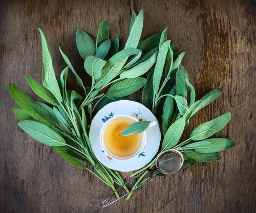 Tasse Tee mit frischen Salbeiblättern Natur Pflanze grün Sommer Haus Winter dunkel Gesunde Ernährung gelb Leben Gesundheit Hintergrundbild Garten braun