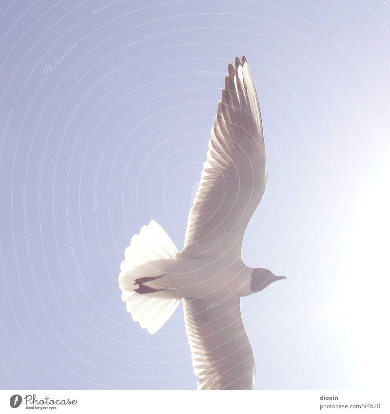 Into The Light Himmel weiß Sonne Meer blau Sommer Tier Vogel Küste Wetter fliegen Luftverkehr Feder Wildtier Schönes Wetter Möwe