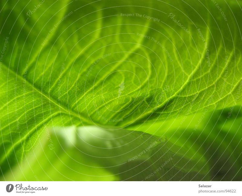 Green pulp Natur grün Pflanze Sommer Blatt springen Blüte Frühling nass Kraft frisch mehrere rund nah zart Blühend