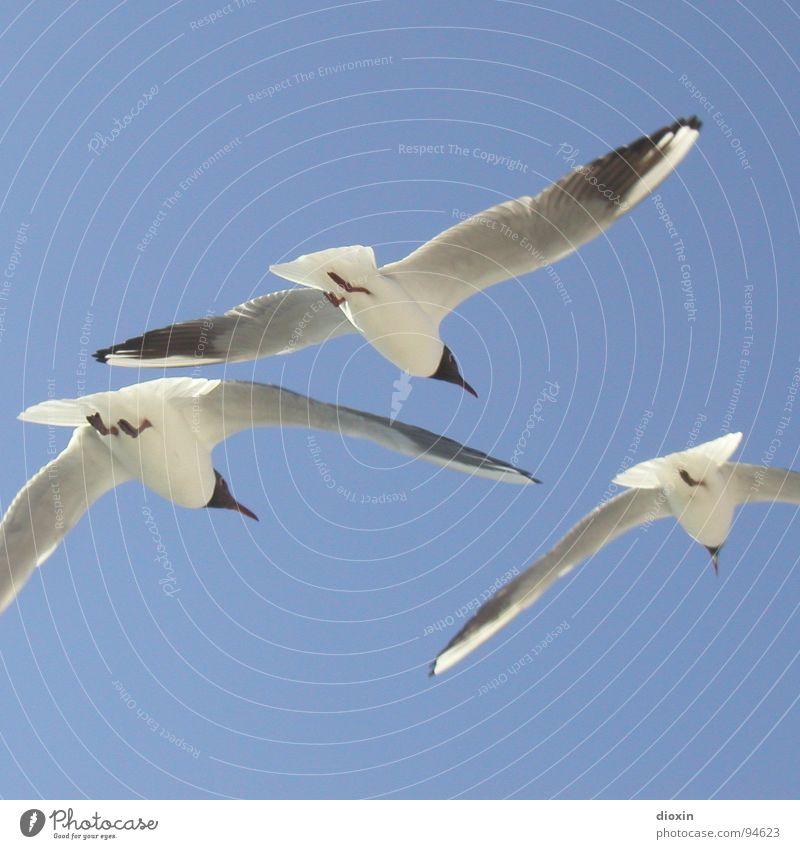 Einbein´s Abschied Farbfoto Außenaufnahme Menschenleer Textfreiraum oben Textfreiraum unten Sonnenlicht Tierporträt Luftverkehr Umwelt Natur Himmel