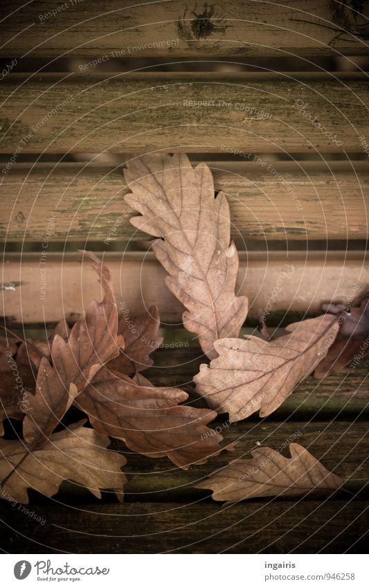 Unterm Eichenbaum Natur Herbst Pflanze Blatt herbstlich Herbstlaub Eichenblatt Garten Holz fallen liegen dehydrieren natürlich nerdig trist trocken braun grün