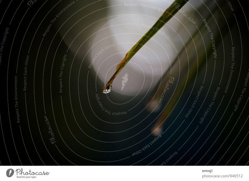 drip drop Natur Wassertropfen Regen Pflanze Sträucher Grünpflanze dunkel nass natürlich grün schwarz Farbfoto Außenaufnahme Nahaufnahme Detailaufnahme