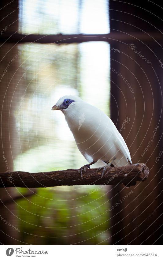 Piepmatz schön weiß Tier Vogel Wildtier Flügel Zoo