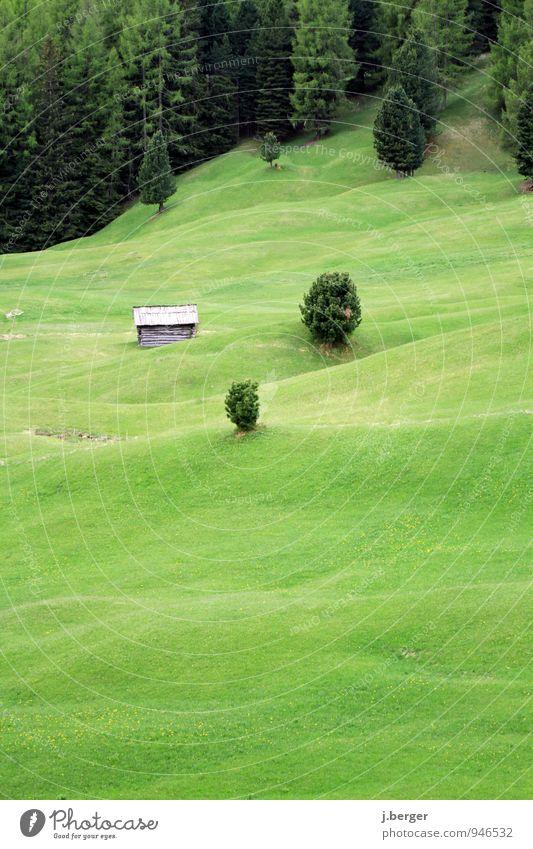 Haus im Grünen Berge u. Gebirge Natur Landschaft Pflanze Sommer Baum Gras Wiese Wald Hügel Alpen grün alpin Weide Nadelwald hügelig Baumgrenze Buckelpiste