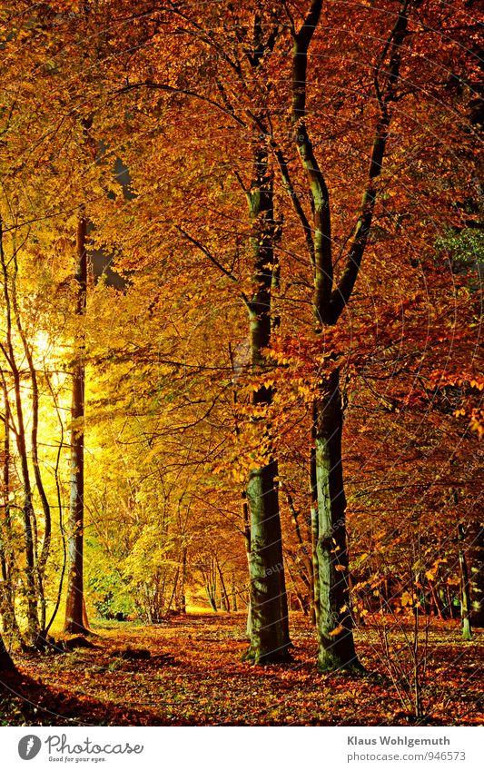 Rauschgold Fußballplatz Natur Landschaft Pflanze Herbst Baum Gras Blatt Grünpflanze Park Wald Salow Datzetal braun gelb rot schwarz Romantik Herbstlaub Farbfoto