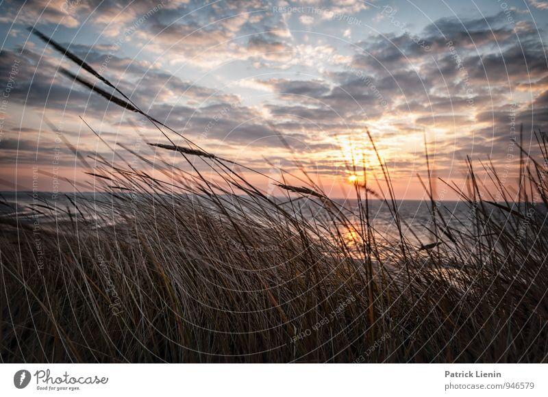 Amrum Wohlgefühl Zufriedenheit Sinnesorgane Erholung Tourismus Ausflug Ferne Freiheit Umwelt Natur Landschaft Pflanze Himmel Wolken Sonne Sonnenaufgang