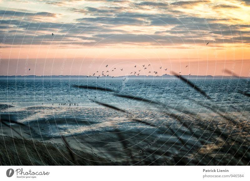 Wattseite Himmel Natur Ferien & Urlaub & Reisen Erholung Meer Landschaft Wolken ruhig Tier Ferne Strand Umwelt Küste Vogel Zufriedenheit Tourismus