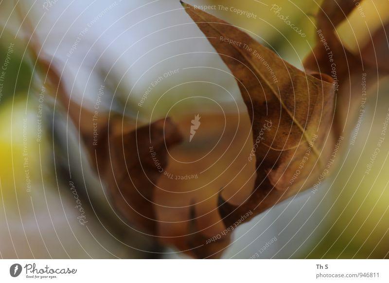 Blatt Natur Pflanze schön grün ruhig Herbst Bewegung Gefühle natürlich braun Stimmung elegant Zufriedenheit authentisch ästhetisch