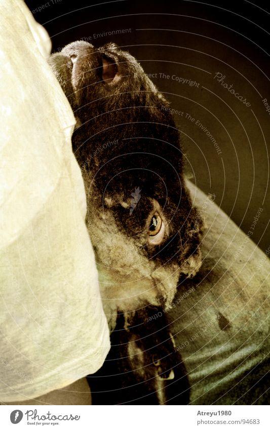 ..ausgeliefert Angst dreckig Gewalt Schaf Panik bewegungslos Wolle Tier