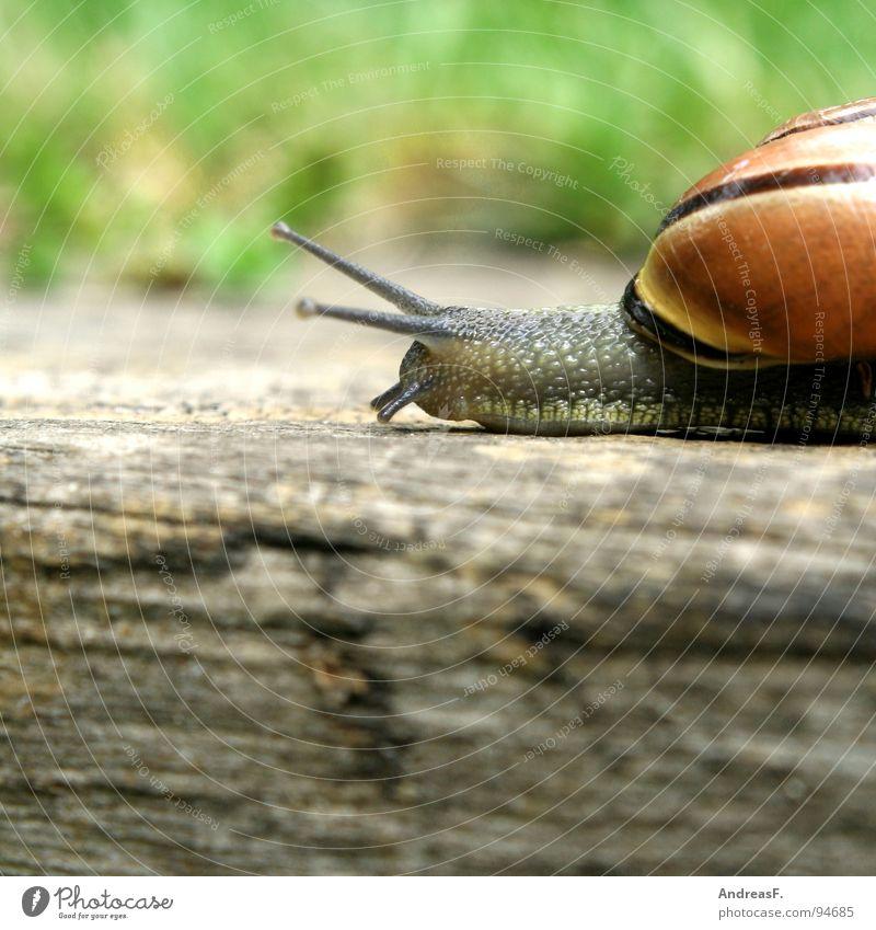 immer der Nase nach Natur Ferien & Urlaub & Reisen Tier Haus Holz Wege & Pfade Bewegung Zeit Wohnung Verkehr Geschwindigkeit Sicherheit Baumstamm Schnecke