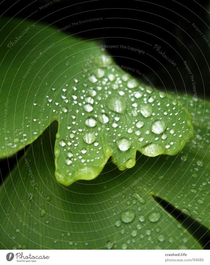 Raindrops Natur Pflanze grün Wasser Blatt schwarz Garten Regen Wassertropfen nass Klarheit nah Kristallstrukturen gestreift feucht Salat