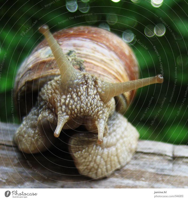 Weinbärschnecke Natur grün Sommer Tier Auge Herbst Gefühle Freiheit braun frei frisch Geschwindigkeit süß weich Neugier Geruch