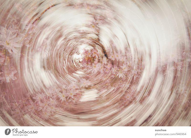 frühlingswis(c)h Kunst Natur Frühling Blüte außergewöhnlich Duft Kitsch rund rosa Geschwindigkeit Dynamik rotieren Farbfoto Gedeckte Farben Außenaufnahme