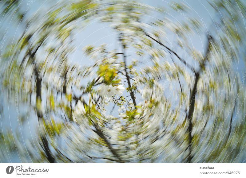 suschaas wisch-trash-fotografie Umwelt Natur Urelemente Luft Himmel Frühling Klima Sturm Pflanze Baum Blüte drehen Duft Fröhlichkeit frisch blau grün Dynamik