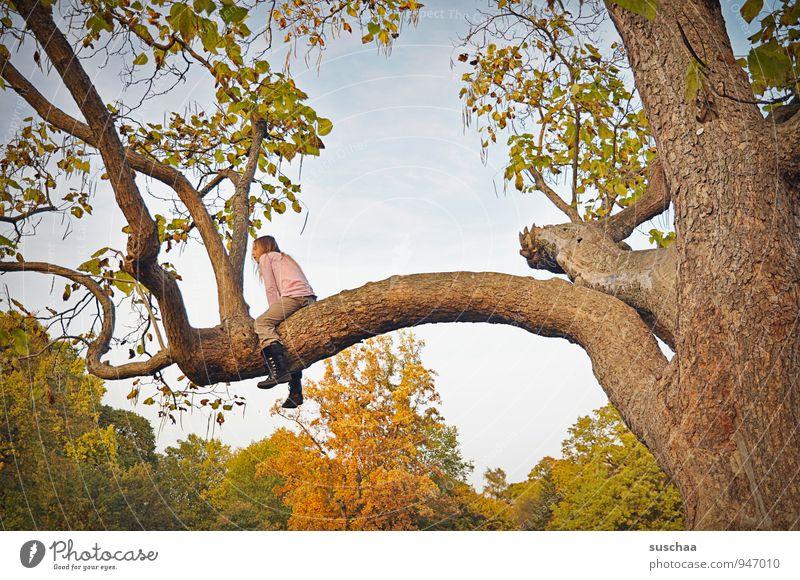 erobert Kind Mädchen Kindheit 8-13 Jahre Umwelt Himmel Herbst Klima Schönes Wetter Baum Holz sitzen Baumstamm Blatt Ast Farbfoto Natur Park Naturschutzgebiet