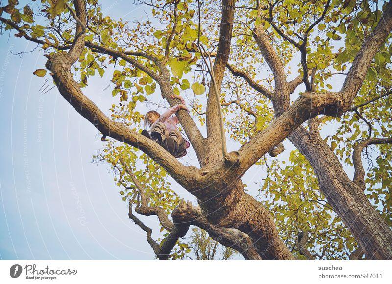 baumkronenbezwingerin Kind Mädchen Junge Kindheit 8-13 Jahre Natur Himmel Herbst Baum Freiheit Freizeit & Hobby bedrohlich Zufriedenheit Ast Baumstamm Blatt