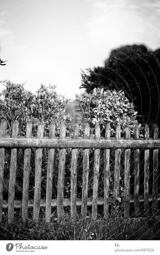 alle latten am zaun Himmel Natur Baum Wolken Umwelt Garten Sträucher Zaun Grenze Zaunpfahl