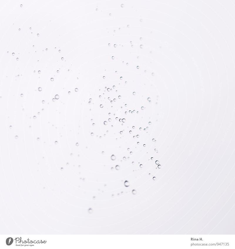 Gefangen im Netz Natur Herbst hängen hell Netzwerk abstrakt Wassertropfen Spinnennetz Kugel zusammenhängend Transparente luftig Leichtigkeit Außenaufnahme