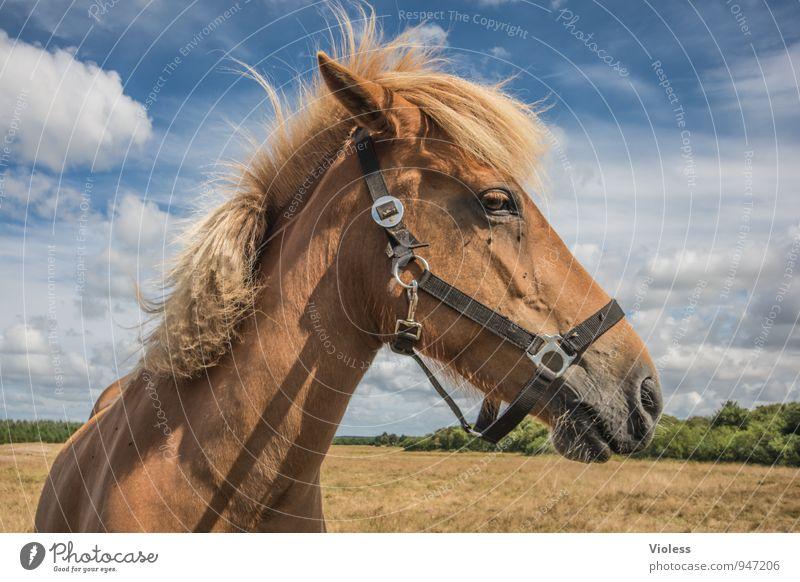 es steht ein Pferd...... Freude Tier natürlich braun Kraft Fell Vertrauen Tiergesicht Ponys Tierliebe Mähne Zaumzeug