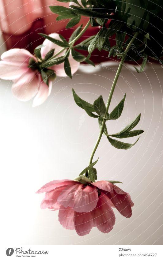 muttertag II Natur Pflanze rot Blume rosa Wachstum Spiegel Baumstamm aufwärts Muttertag