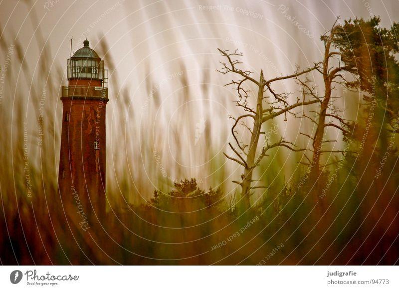 400 | Versteckte Leuchtkraft See Leuchtturm Meer Strand Küste Gras Navigation Orientierung Licht salzig Ferien & Urlaub & Reisen Seezeichen
