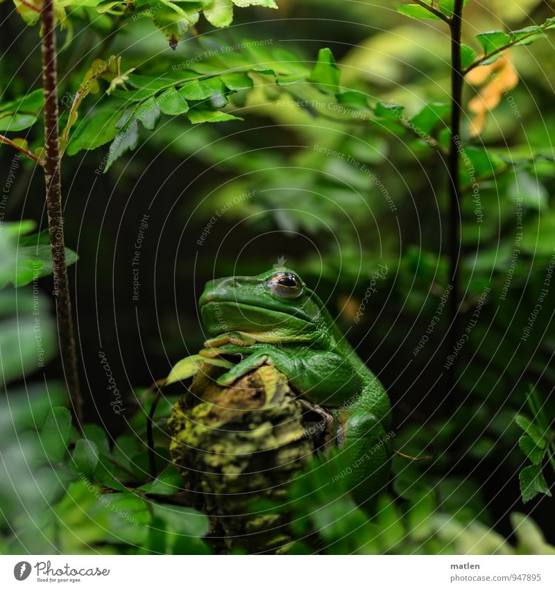 mal abwarten Pflanze grün Baum Tier braun sitzen Moos Frosch