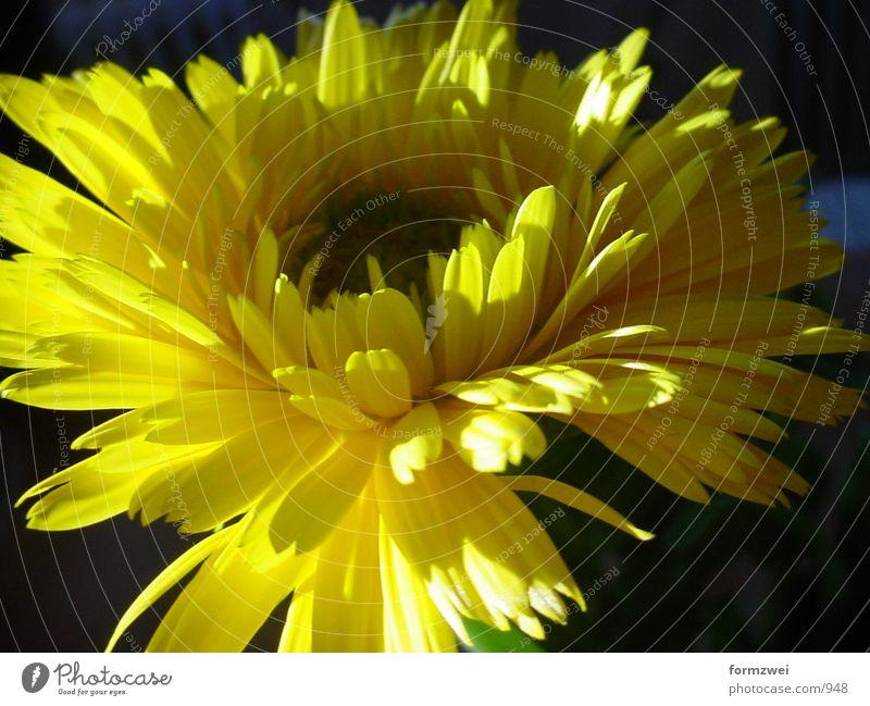 Blume Blüte Dinge
