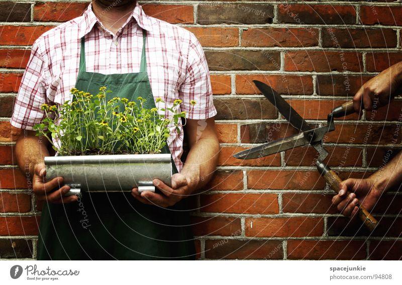 Cut my flowers! Mann Natur grün Blume Sommer Freude Wand Blüte lustig skurril geschnitten Schere kopflos Gärtner Werkzeug Schürze