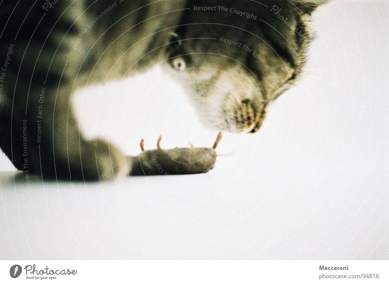 Mörder III Katze weiß Tod Spielen Fuß Ernährung Fell Spielzeug fangen Jagd Geruch Bioprodukte Säugetier Fressen Abendessen Pfote