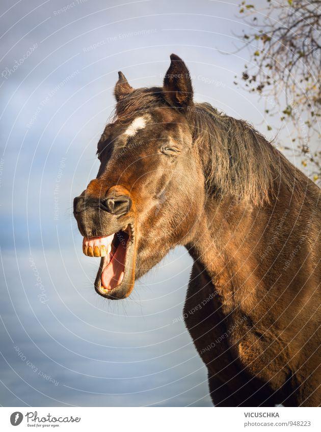 Gähnende Braunes Pferd Am Himmel Hintergrund Ein Lizenzfreies