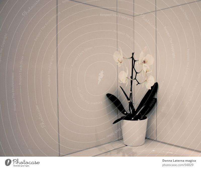 Blümchen Orchidee Blume weiß grau grün Bad Fuge Götter Blüte Einsamkeit befangen kalt 4 hell Plättchen Plattenbau Leben Gott Ecke lässssig