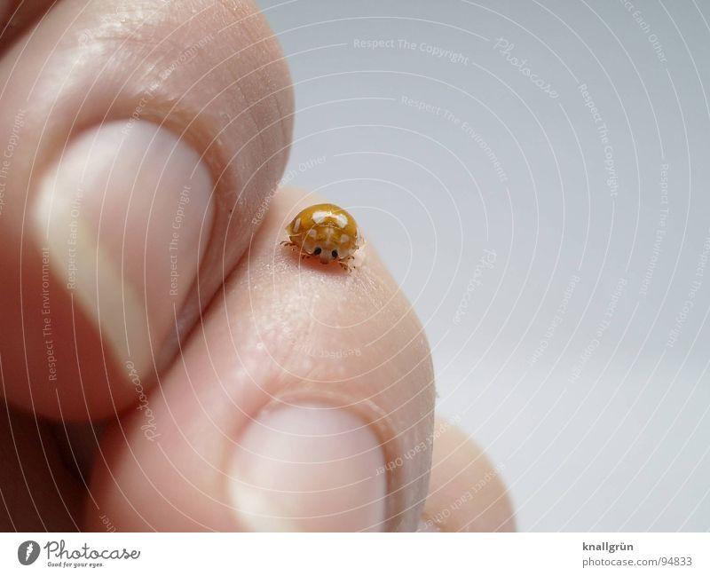 Kleines Glück Natur Hand weiß Freude Tier gelb Gefühle Haut Finger Insekt Punkt berühren Fleck Marienkäfer Käfer