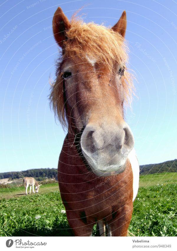 Pferd Tier Nutztier Tiergesicht 1 2 lustig blau braun grün weiß Farbfoto Außenaufnahme Tag Blick in die Kamera Blick nach vorn