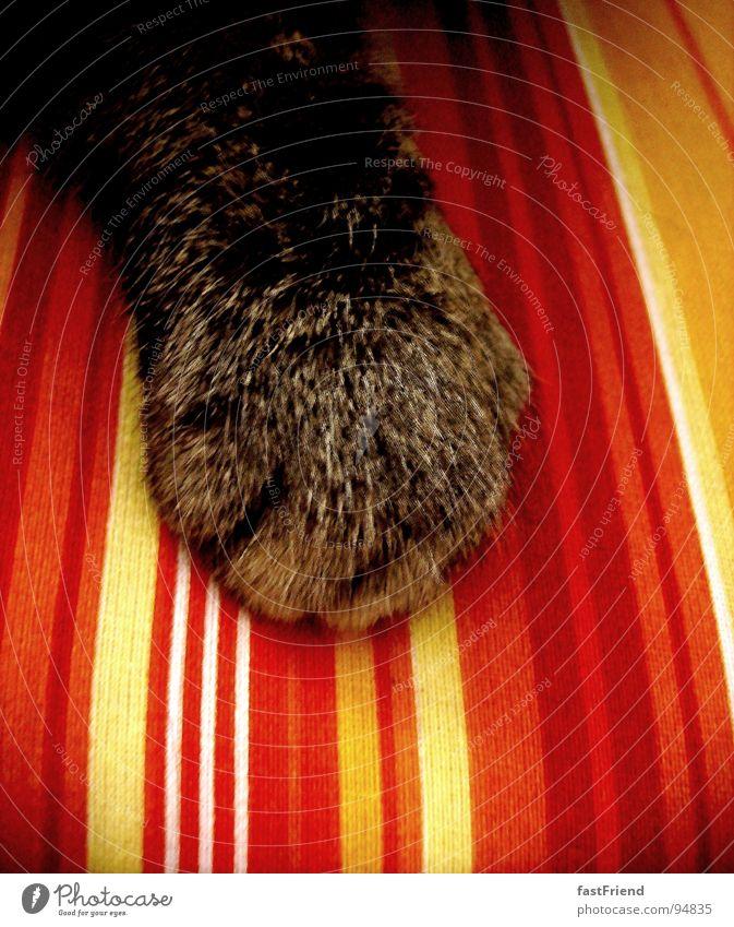neulich auf der Sitzbank rot gelb dunkel Haare & Frisuren Katze hell Streifen Wohnzimmer Langeweile sanft Säugetier Pfote
