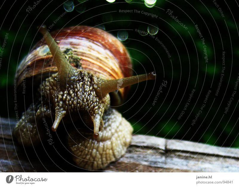 Weinbergschnecke Natur grün Sommer Tier Auge Herbst Gefühle Freiheit braun frei frisch Geschwindigkeit süß weich Neugier Geruch