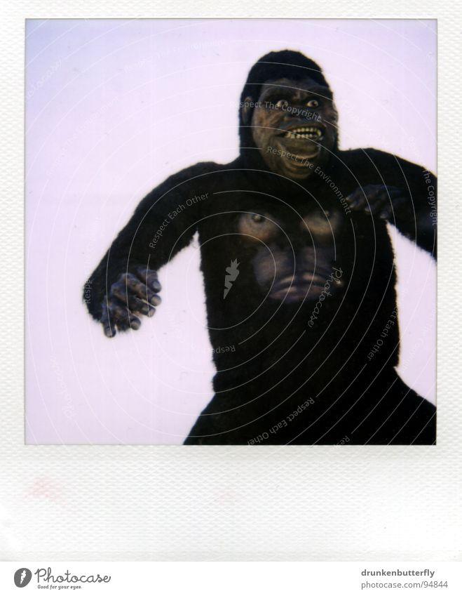 King Kong lebt! Gorilla Affen Tier Fell Zoo Animation gruselig B-Movie obskur Affenmensch Puppe Krallen Brust Himmel Theaterschauspiel Polaroid