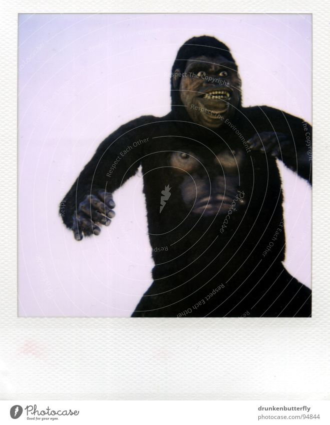 King Kong lebt! Himmel Tier Brust Fell Zoo gruselig obskur Theaterschauspiel Puppe Affen Krallen Polaroid Medien Gorilla Animation
