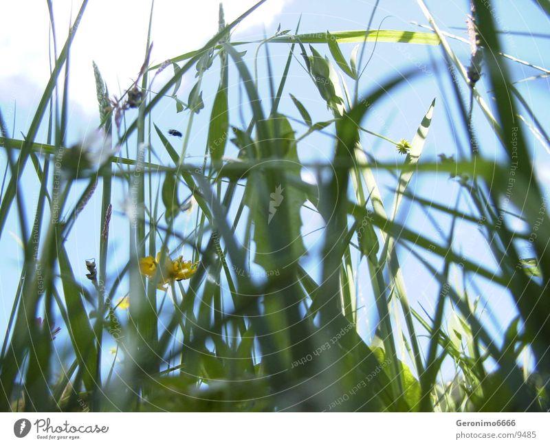 wilde Wiese grün Schweiz Sommer Blume Gras Fliege Natur