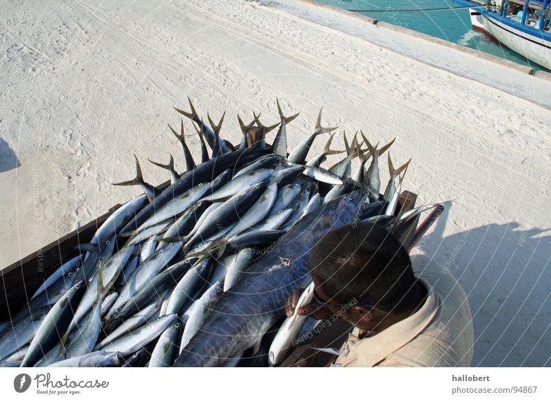 Malediven Fisch 02 Meer Fischer Ferien & Urlaub & Reisen Angeln Angler Wasser traumurlaub frischer fisch
