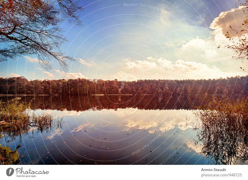 Herbstwald am See Himmel Natur Ferien & Urlaub & Reisen blau Wasser Sonne Erholung Landschaft ruhig Wolken Ferne Wald Glück Stimmung