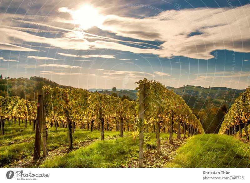 Herstnachmittag in den Weinbergen Himmel Natur Ferien & Urlaub & Reisen Pflanze schön Sonne Baum Erholung Landschaft Wolken Ferne Umwelt Berge u. Gebirge Herbst