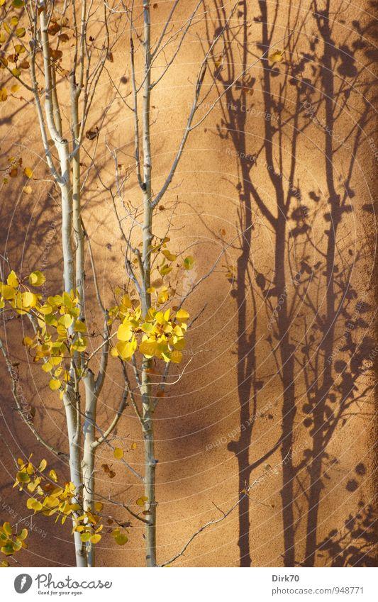 Aspens and Adobe Ferien & Urlaub & Reisen Baum Blatt Ferne gelb Wärme Wand Leben Herbst Mauer Stil grau Garten braun Zufriedenheit Dekoration & Verzierung