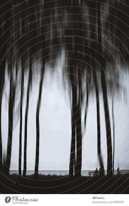 spooky trees III Pflanze Baum schwarz Wald Bewegung Wege & Pfade träumen Angst verrückt Baumstamm gruselig chaotisch Urwald trashig mystisch Waldboden