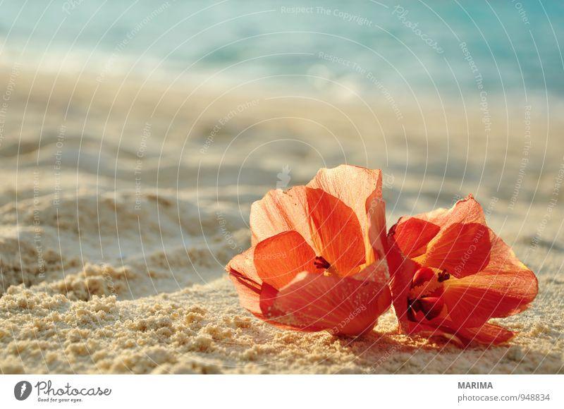 two flowers on the beach Natur Ferien & Urlaub & Reisen Pflanze Wasser Sommer Erholung Meer rot Blume Landschaft Strand Blüte Sand Tourismus planen Asien