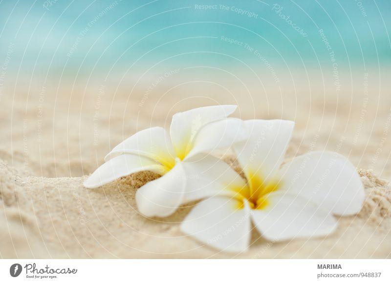 two flowers on the beach exotisch harmonisch Erholung Ferien & Urlaub & Reisen Sommer Strand Meer Natur Pflanze Sand Wasser Blume Blüte gelb türkis weiß 2 zwei