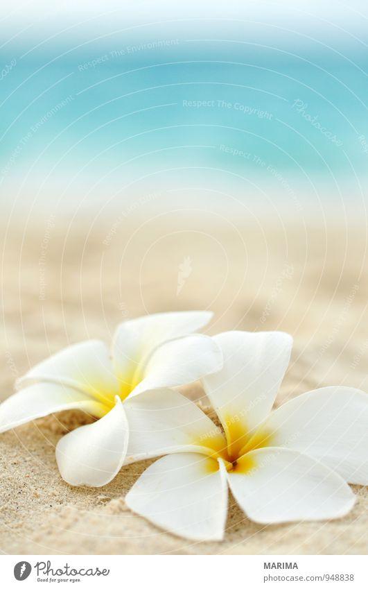 two flowers on the beach exotisch harmonisch Erholung Ferien & Urlaub & Reisen Sommer Strand Meer Natur Pflanze Sand Wasser Blume Blüte gelb türkis weiß zwei