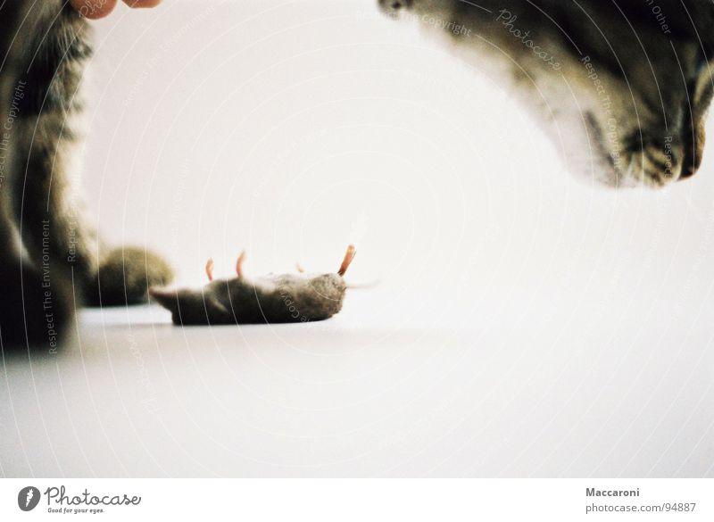 Mörder IV Katze weiß Tod Fuß Verkehr Rücken Ernährung Nase Fell Spielzeug fangen Bauch Abendessen Pfote Maus Schwanz