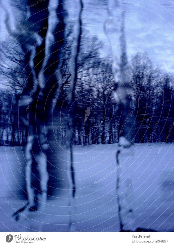Perniones weiß Baum blau Winter Wald kalt Schnee Eis Frost gefroren Fensterscheibe Schnellzug Eiszapfen Grad Celsius