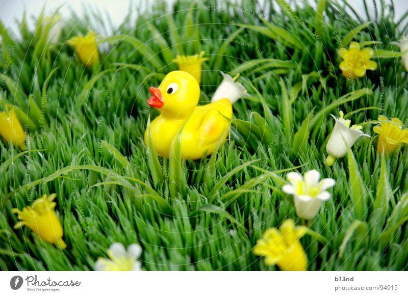 Quietschi auf Reisen weiß Blume grün Pflanze gelb Wiese Blüte Gras Frühling Rasen Kitsch Statue Kunststoff Stillleben Ente Schnabel